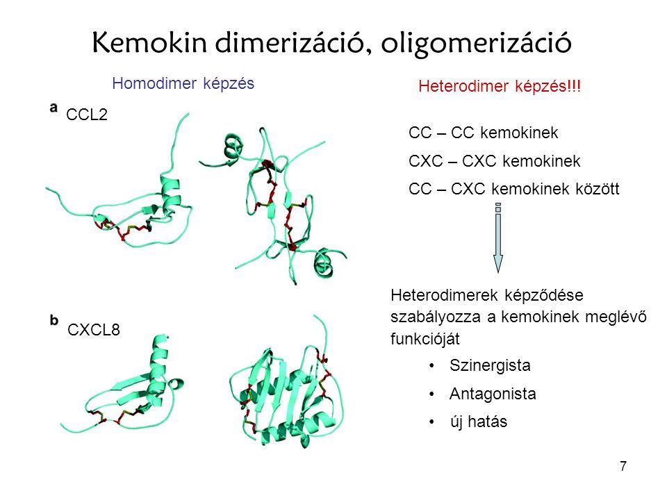 Kemokin dimerizáció, oligomerizáció