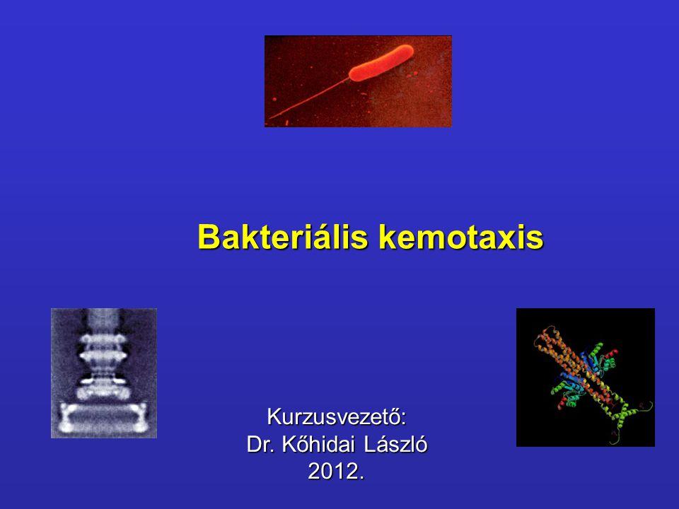 Bakteriális kemotaxis