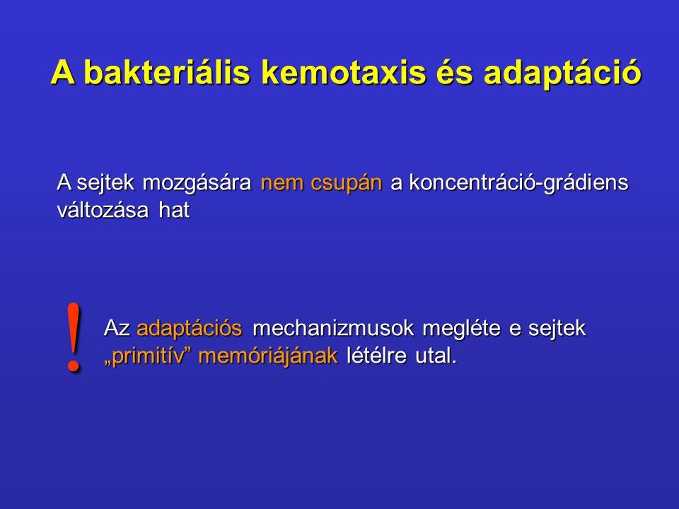 ! A bakteriális kemotaxis és adaptáció