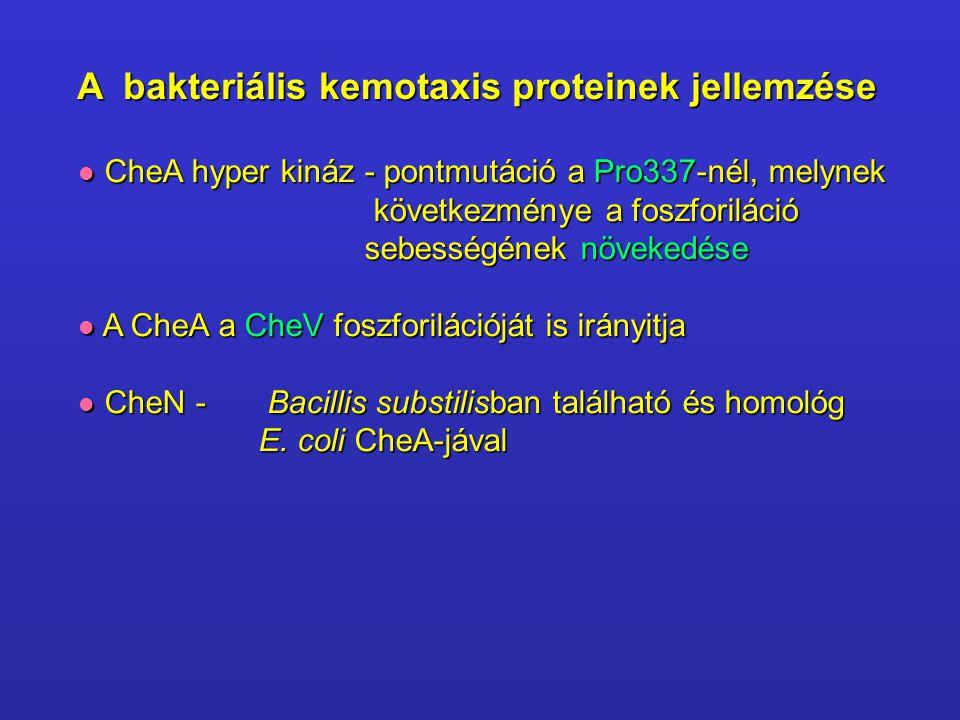 A bakteriális kemotaxis proteinek jellemzése