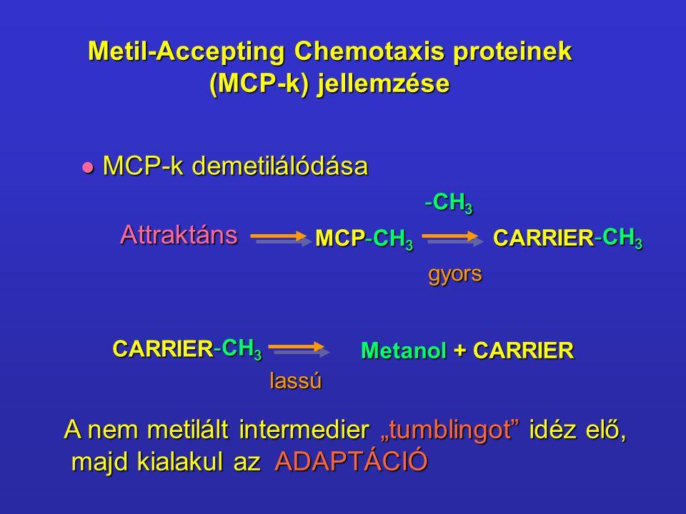 Metil-Accepting Chemotaxis proteinek