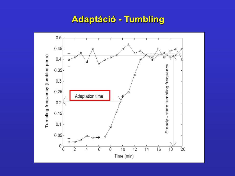 Adaptáció - Tumbling