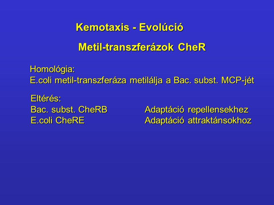 Metil-transzferázok CheR