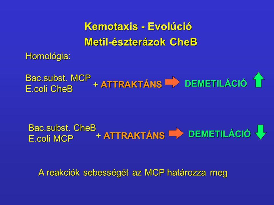 Metil-észterázok CheB