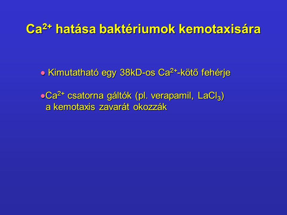 Ca2+ hatása baktériumok kemotaxisára
