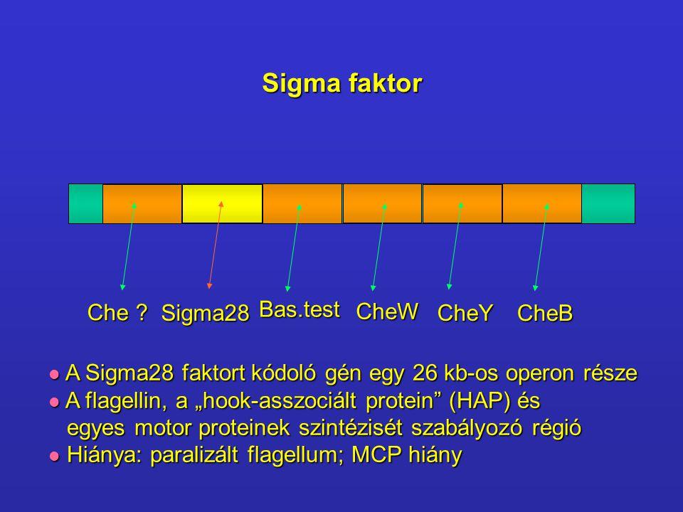 Sigma faktor Che Sigma28 Bas.test CheW CheY CheB