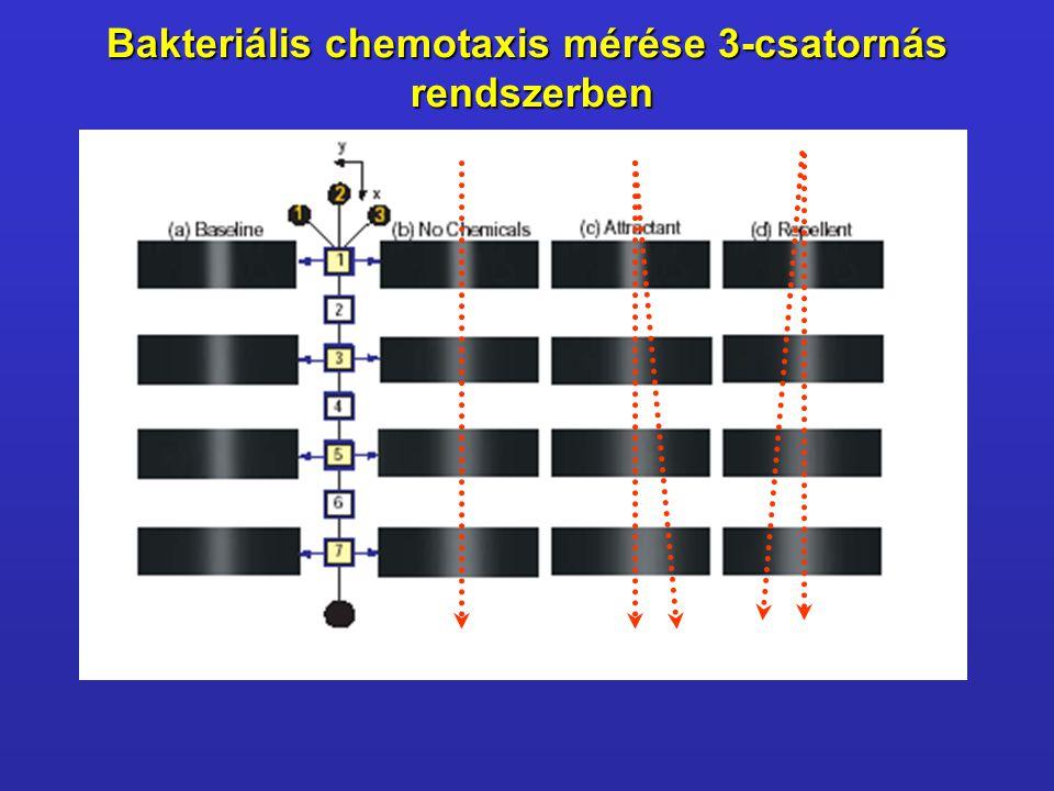 Bakteriális chemotaxis mérése 3-csatornás