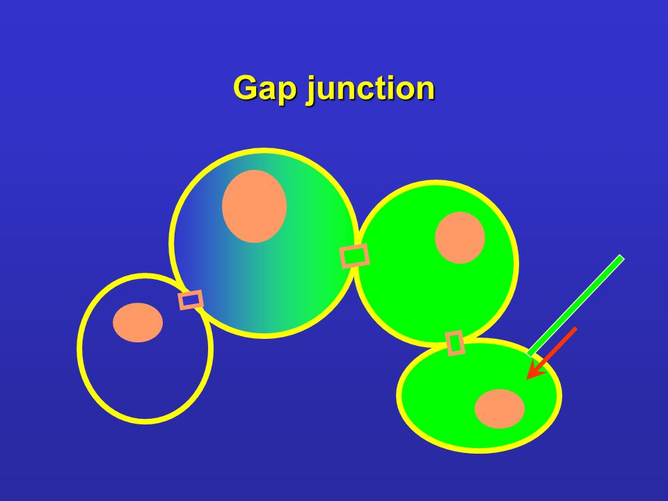 Gap junction