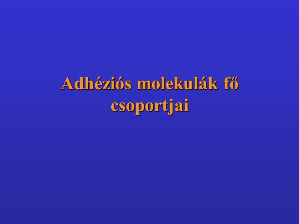 Adhéziós molekulák fő csoportjai