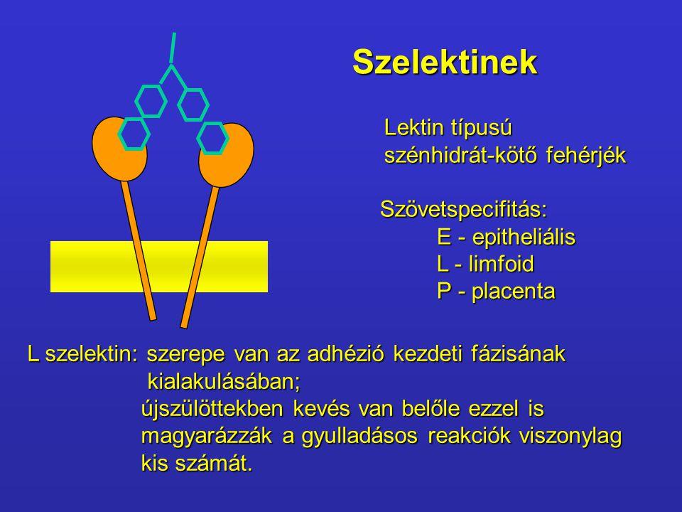 Szelektinek Lektin típusú szénhidrát-kötő fehérjék Szövetspecifitás: