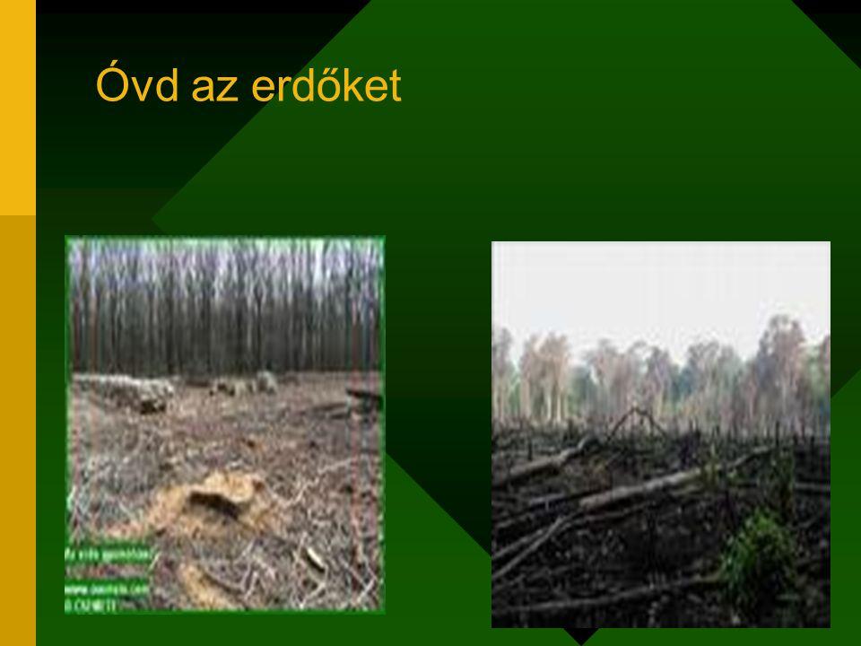 Óvd az erdőket