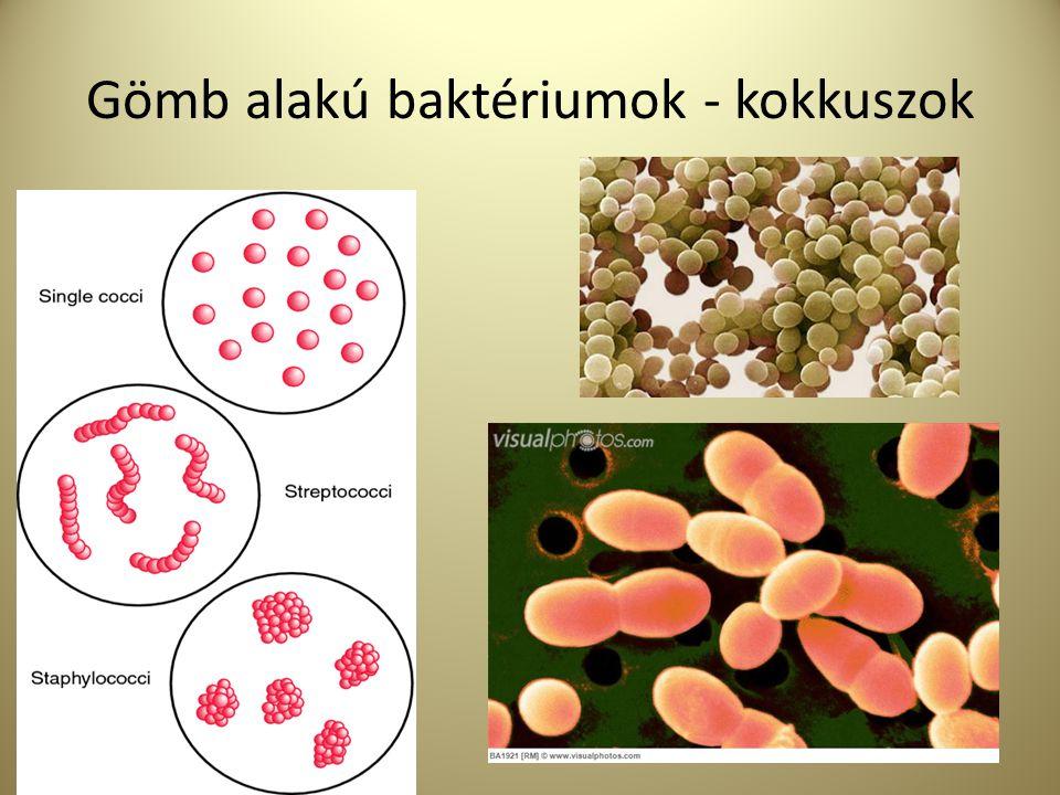 Gömb alakú baktériumok - kokkuszok