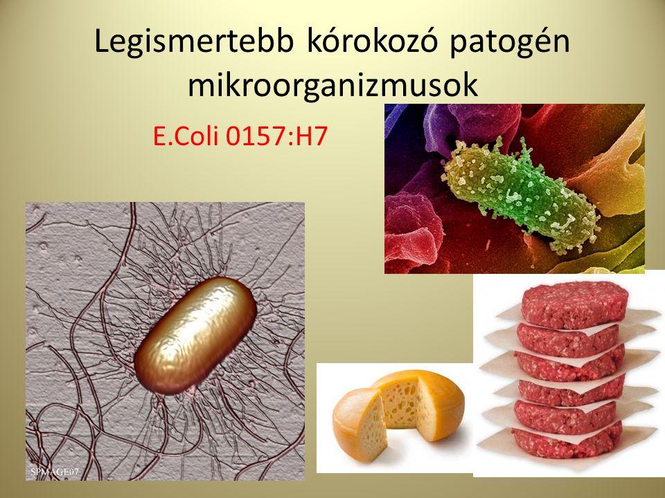 Legismertebb kórokozó patogén mikroorganizmusok