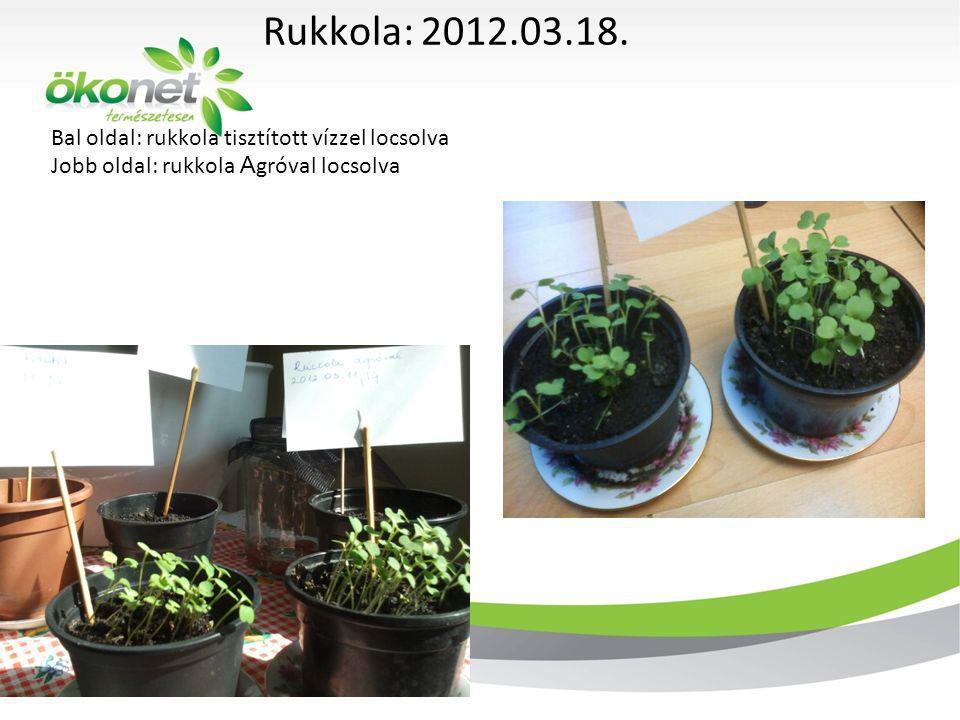Rukkola: 2012.03.18. Bal oldal: rukkola tisztított vízzel locsolva Jobb oldal: rukkola Agróval locsolva.