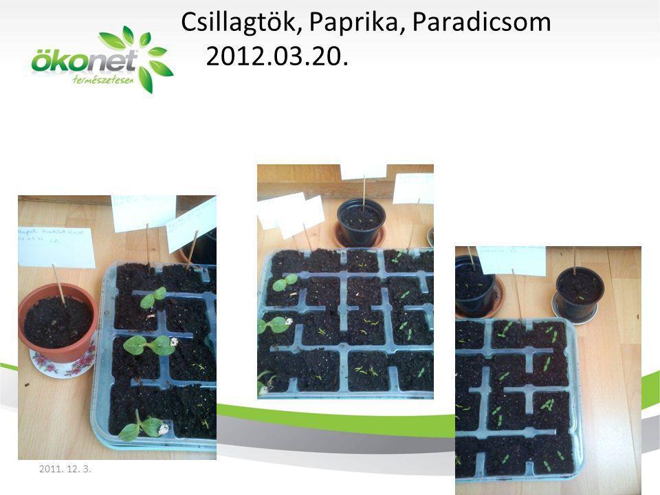 Csillagtök, Paprika, Paradicsom 2012.03.20.