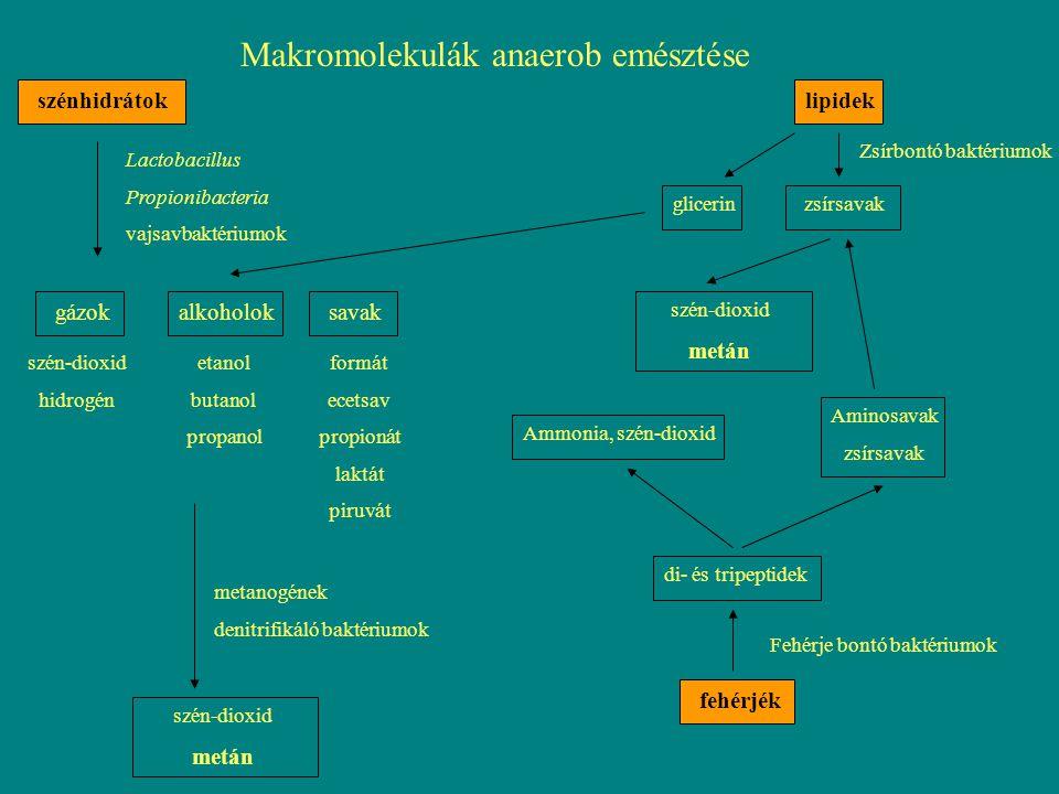Makromolekulák anaerob emésztése