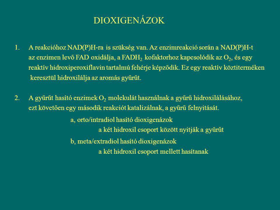 DIOXIGENÁZOK