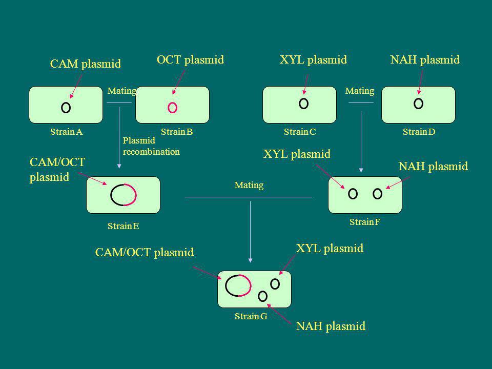OCT plasmid XYL plasmid NAH plasmid CAM plasmid XYL plasmid