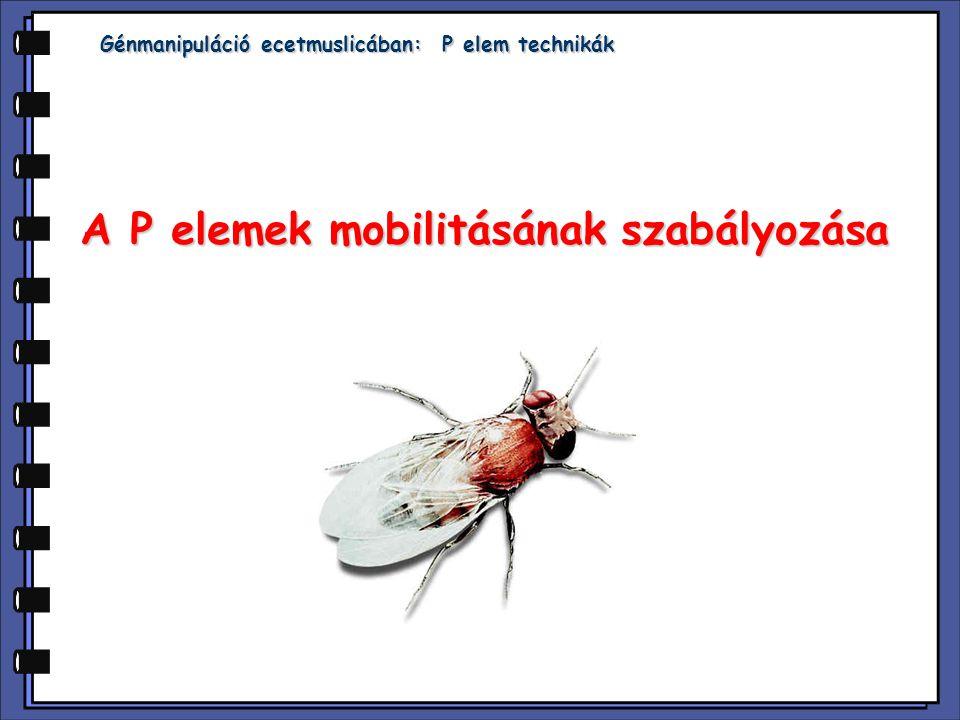 A P elemek mobilitásának szabályozása