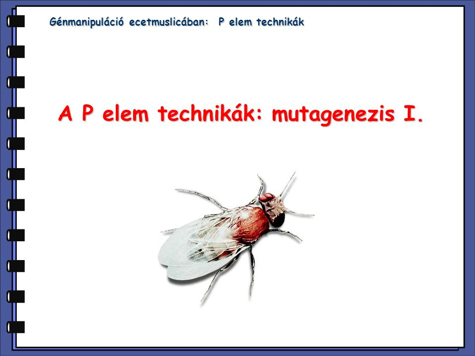 A P elem technikák: mutagenezis I.