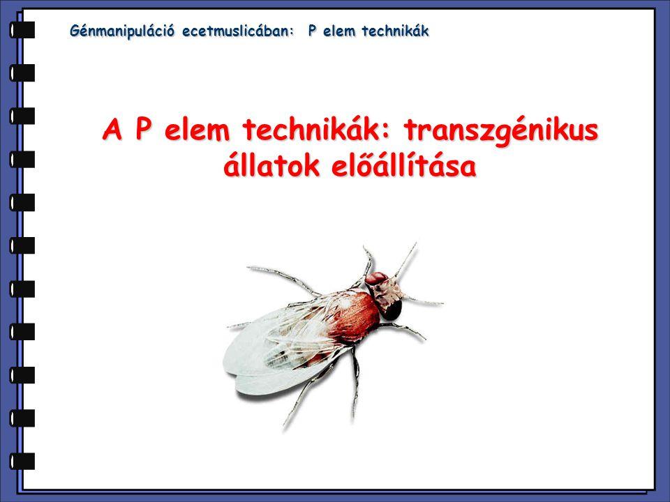 A P elem technikák: transzgénikus állatok előállítása