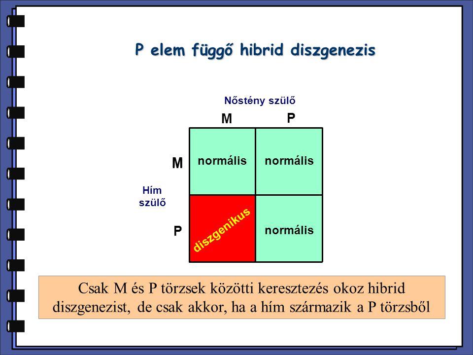 P elem függő hibrid diszgenezis