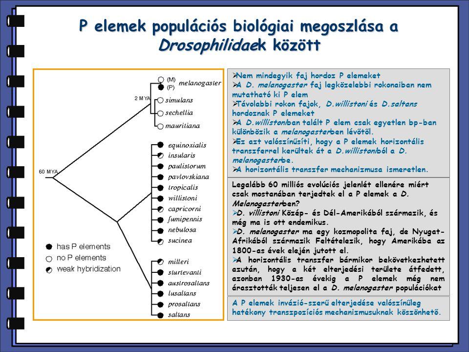 P elemek populációs biológiai megoszlása a Drosophilidaek között