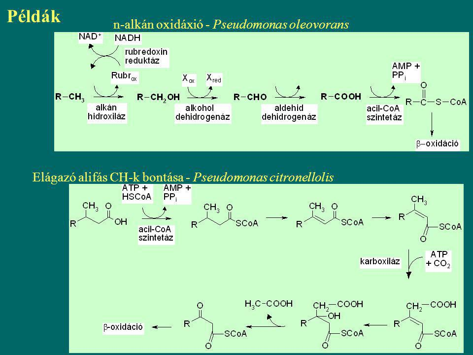 Példák n-alkán oxidáxió - Pseudomonas oleovorans