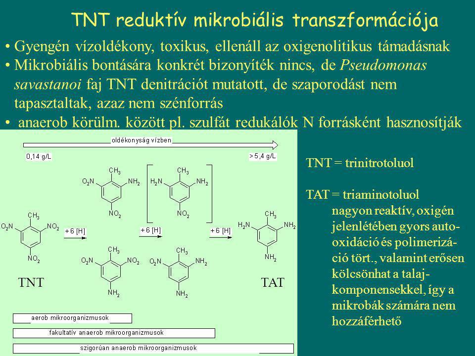 TNT reduktív mikrobiális transzformációja