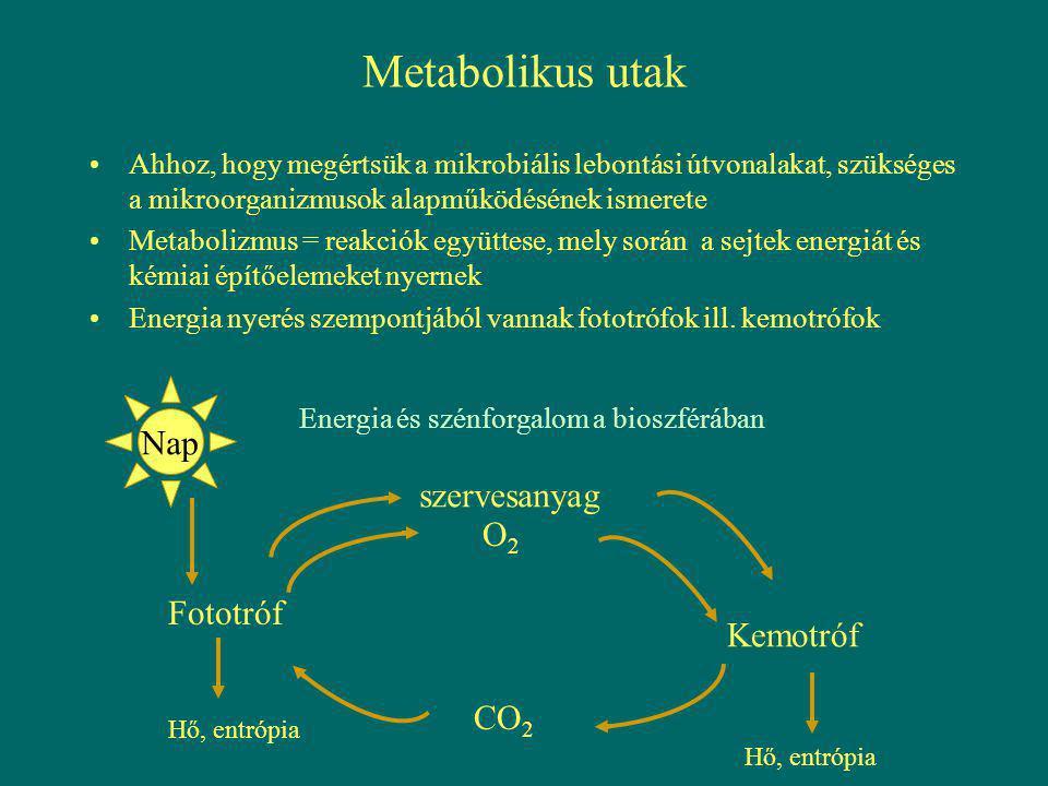 Metabolikus utak Nap szervesanyag O2 Fototróf Kemotróf CO2