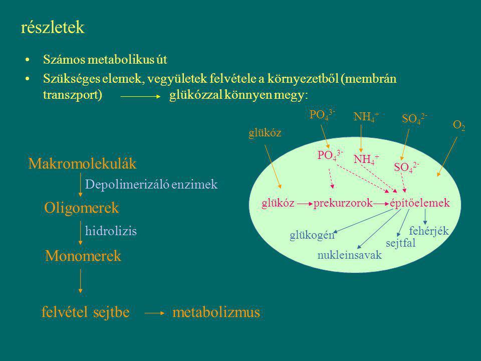részletek Makromolekulák Oligomerek Monomerek felvétel sejtbe