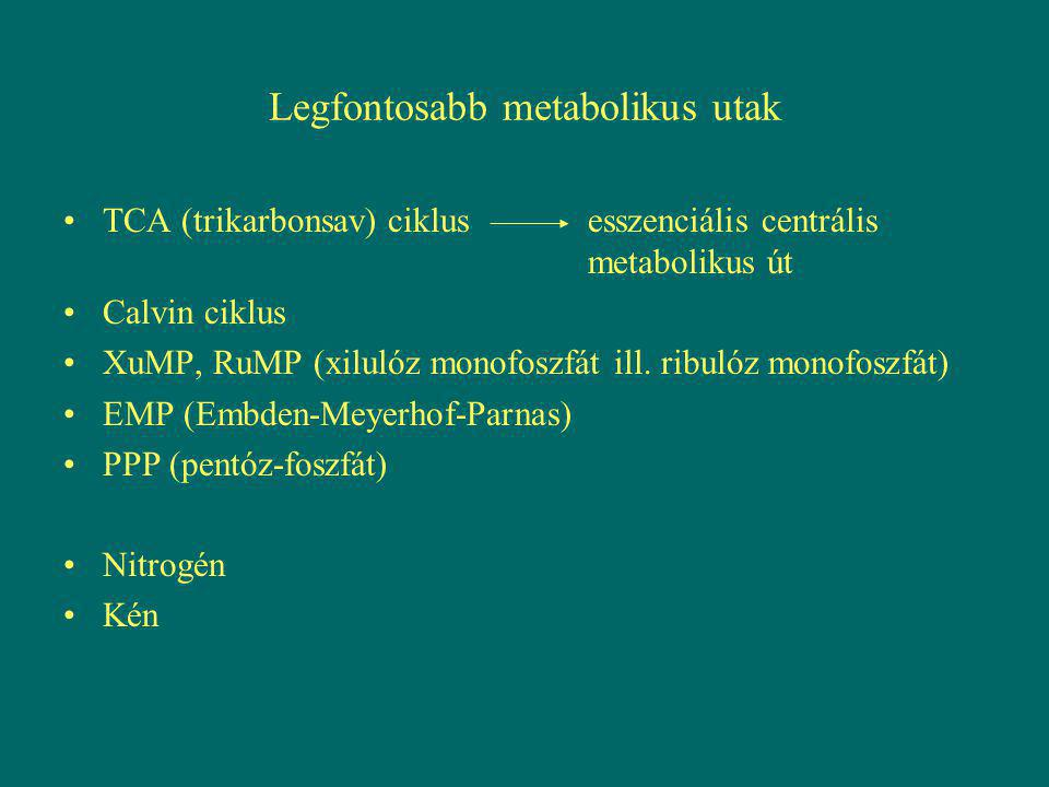Legfontosabb metabolikus utak