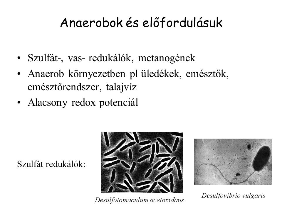 Anaerobok és előfordulásuk