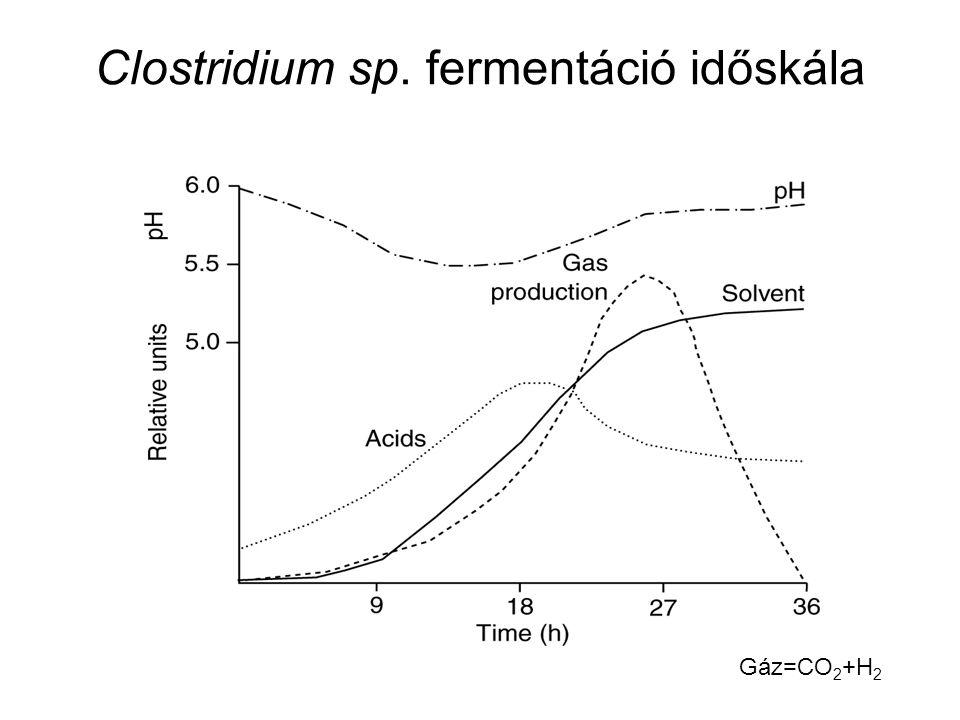 Clostridium sp. fermentáció időskála