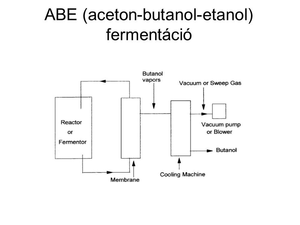 ABE (aceton-butanol-etanol) fermentáció