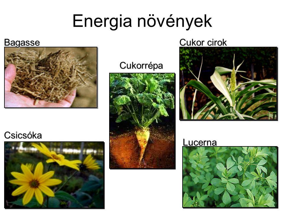 Energia növények Bagasse Cukor cirok Cukorrépa Csicsóka Lucerna