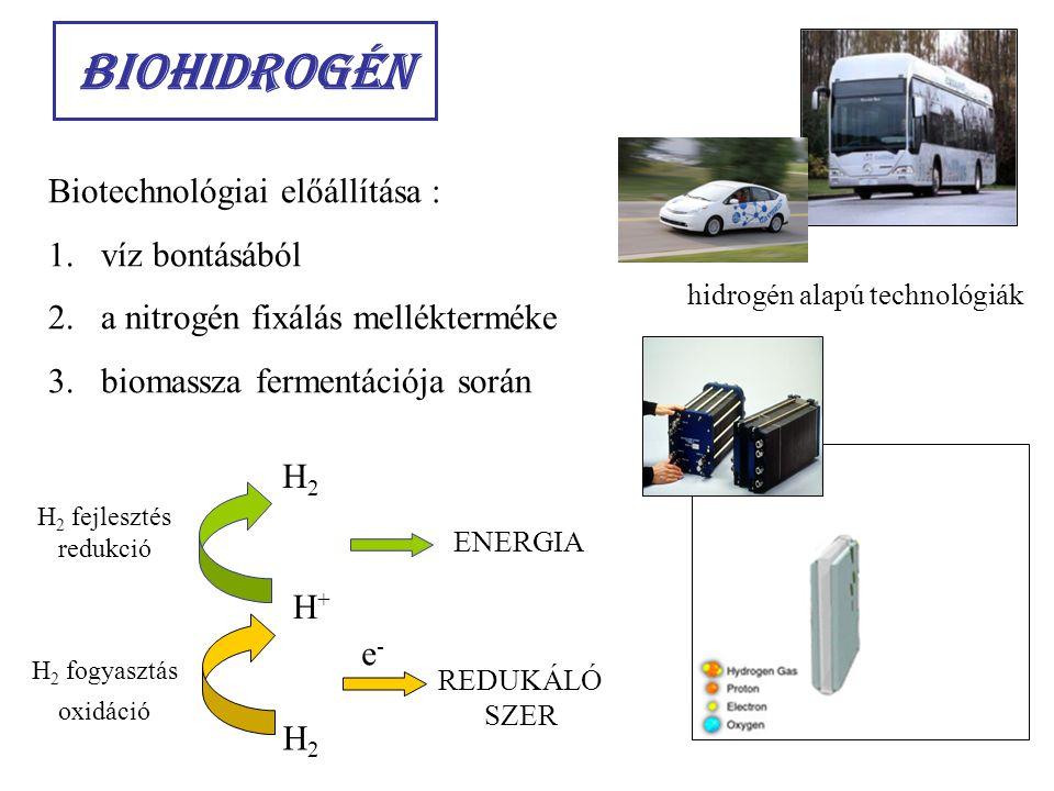 Biohidrogén Biotechnológiai előállítása : víz bontásából