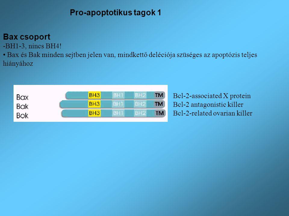 Pro-apoptotikus tagok 1