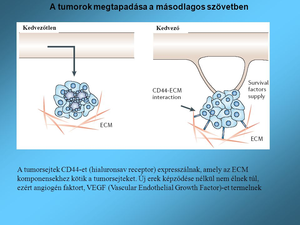 A tumorok megtapadása a másodlagos szövetben