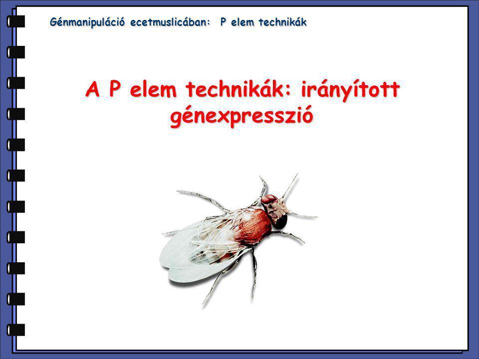 A P elem technikák: irányított génexpresszió
