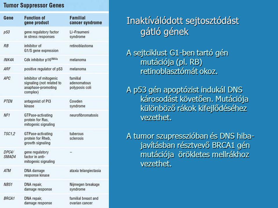 Inaktíválódott sejtosztódást gátló gének