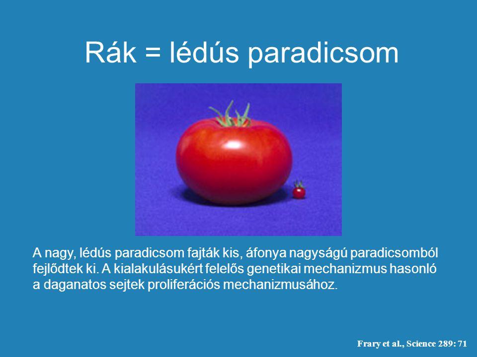 Rák = lédús paradicsom