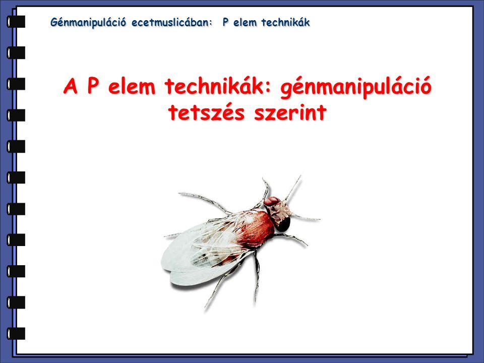 A P elem technikák: génmanipuláció tetszés szerint