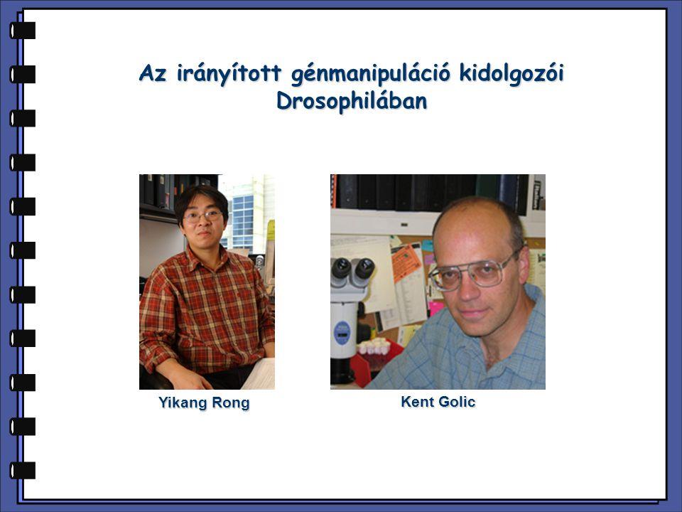 Az irányított génmanipuláció kidolgozói Drosophilában