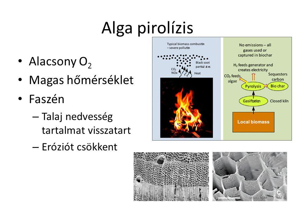 Alga pirolízis Alacsony O2 Magas hőmérséklet Faszén