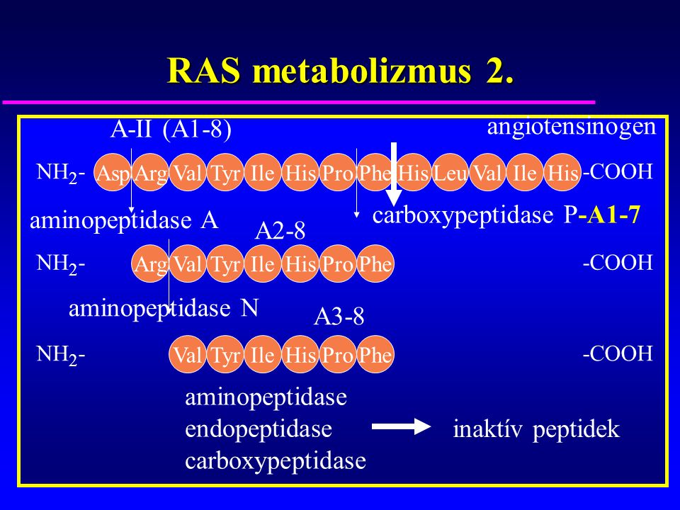 RAS metabolizmus 2. angiotensinogen A-II (A1-8)