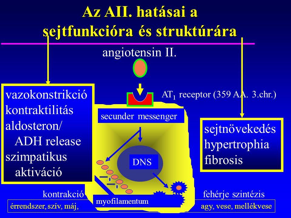 Az AII. hatásai a sejtfunkcióra és struktúrára