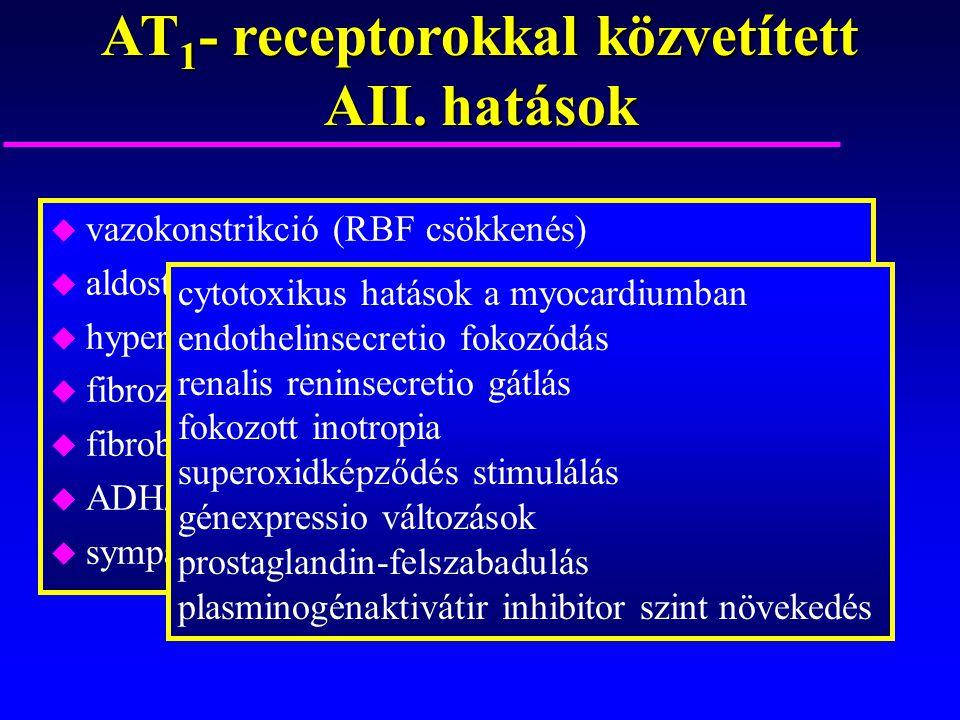 AT1- receptorokkal közvetített AII. hatások