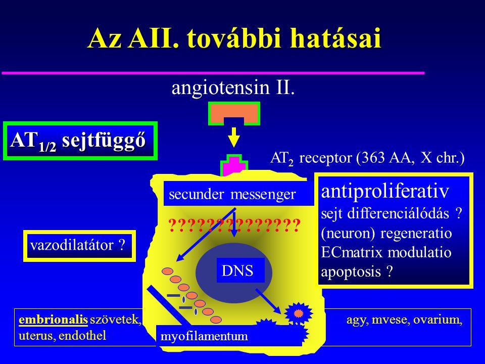 Az AII. további hatásai angiotensin II. AT1/2 sejtfüggő