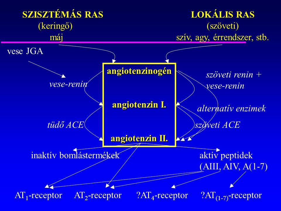 angiotenzinogén angiotenzin I. angiotenzin II.